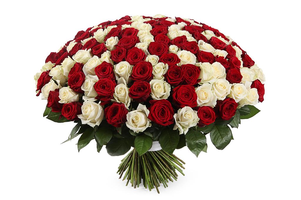 конце фото букет роз белых и красных все